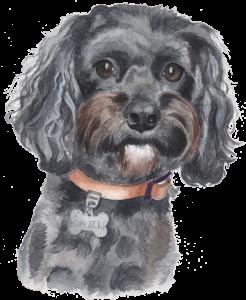Pet portrait artist UK