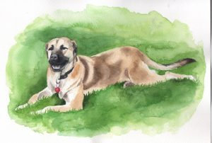 Watercolour dog portraiture