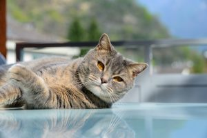 Cat portrait artist UK