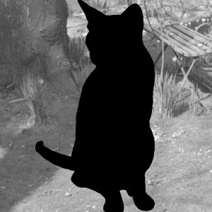 Cat portrait with detailed background