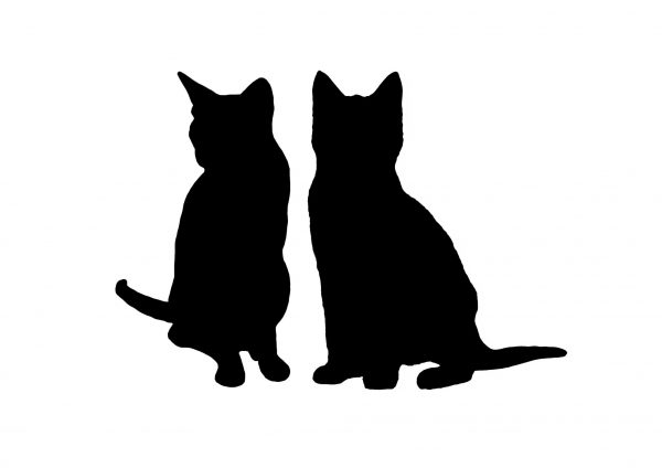 Watercolour pet portrait artist cat