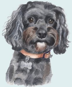 Dog portraits from photo