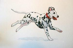 Dalmation Pet Portrait