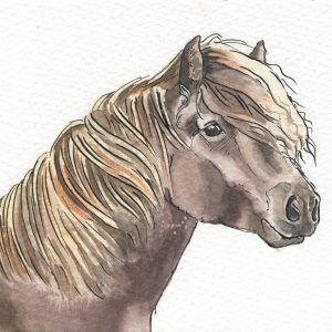 Pony Pet Portrait